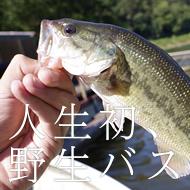 津久井湖で人生初、野生バス