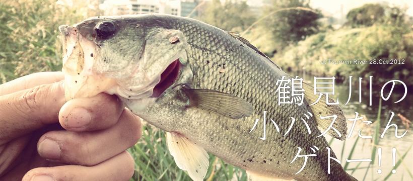 鶴見川でオカッパリ リベンジ